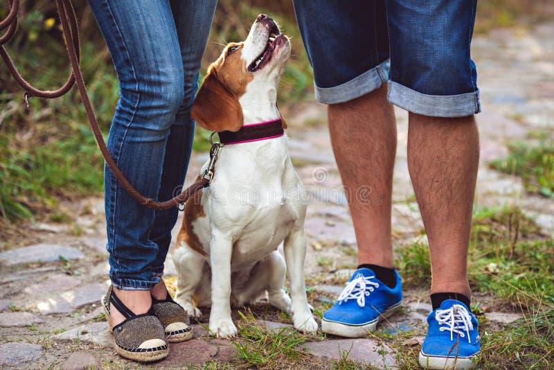 小猎犬狗纵向 库存照片