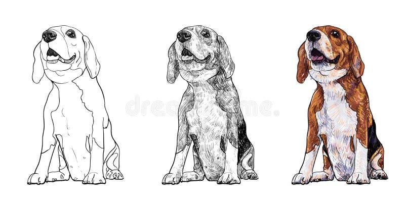 小猎犬 向量例证