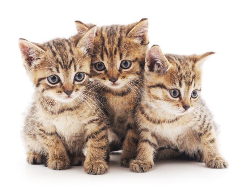小猫三 免版税库存照片