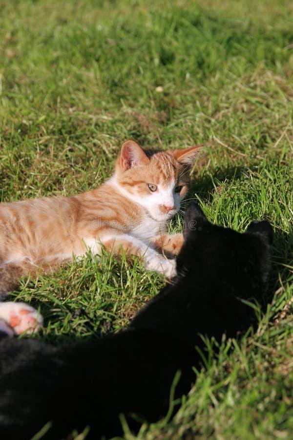小猫二 库存图片