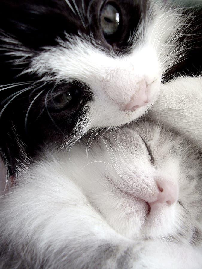 小猫二 免版税图库摄影