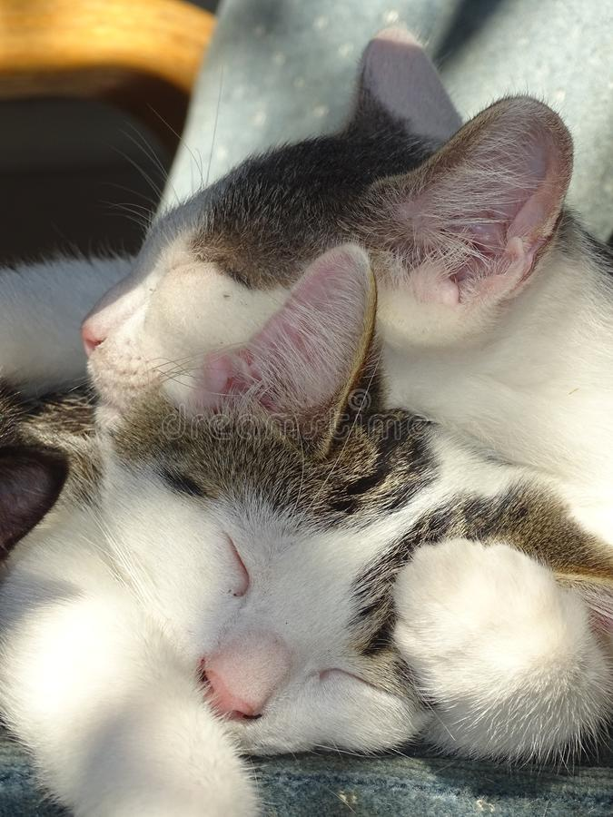 小猫们躺在一起睡觉 库存图片