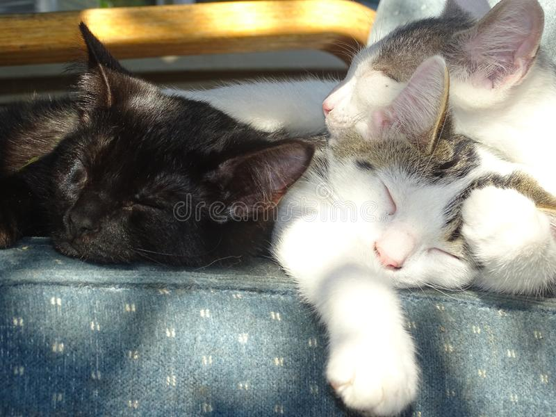 小猫们躺在一起睡觉 免版税库存图片