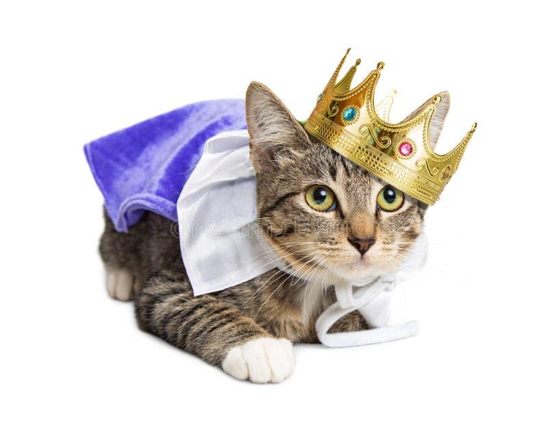 小猫佩带的王子服装 免版税图库摄影