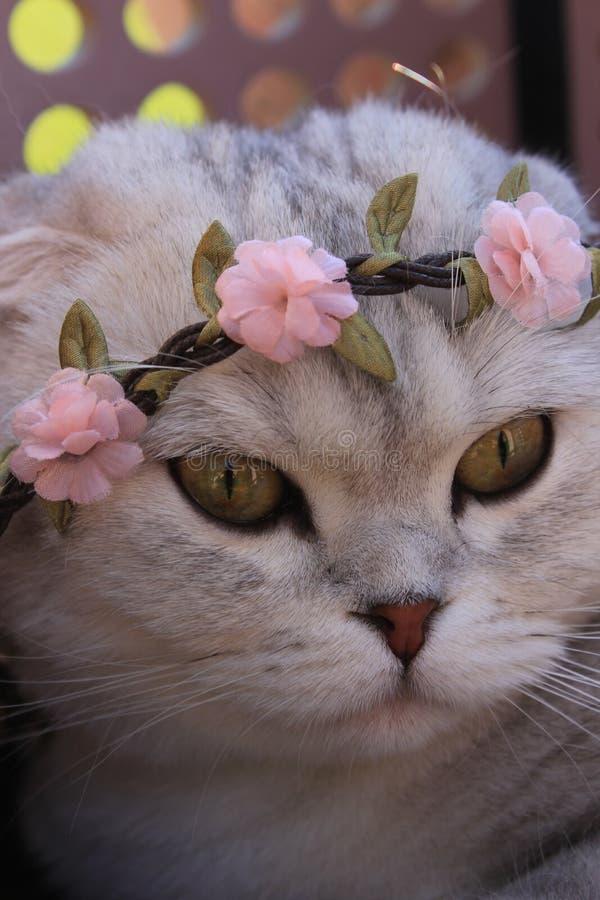 小猫佩带的花冠 免版税库存图片