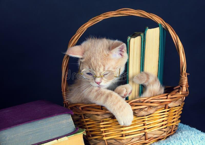 小猫佩带的玻璃,坐在与书的一个篮子 免版税库存图片