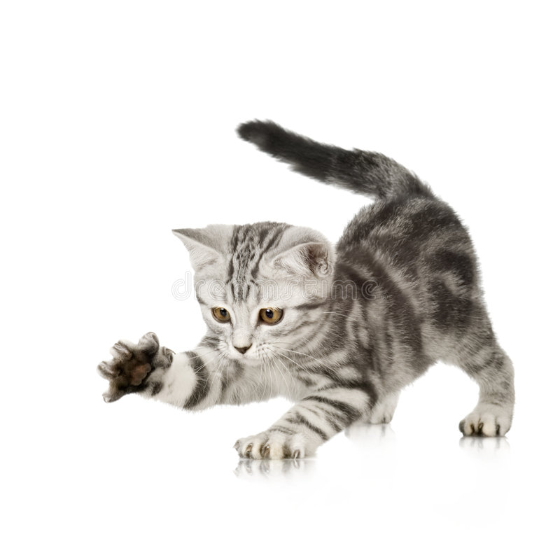 小猫使用 图库摄影
