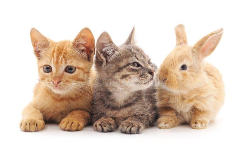 小猫和兔子 免版税图库摄影
