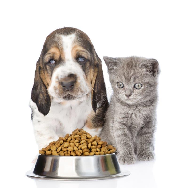小猫和小狗与一碗干猫食 查出在白色 免版税库存照片