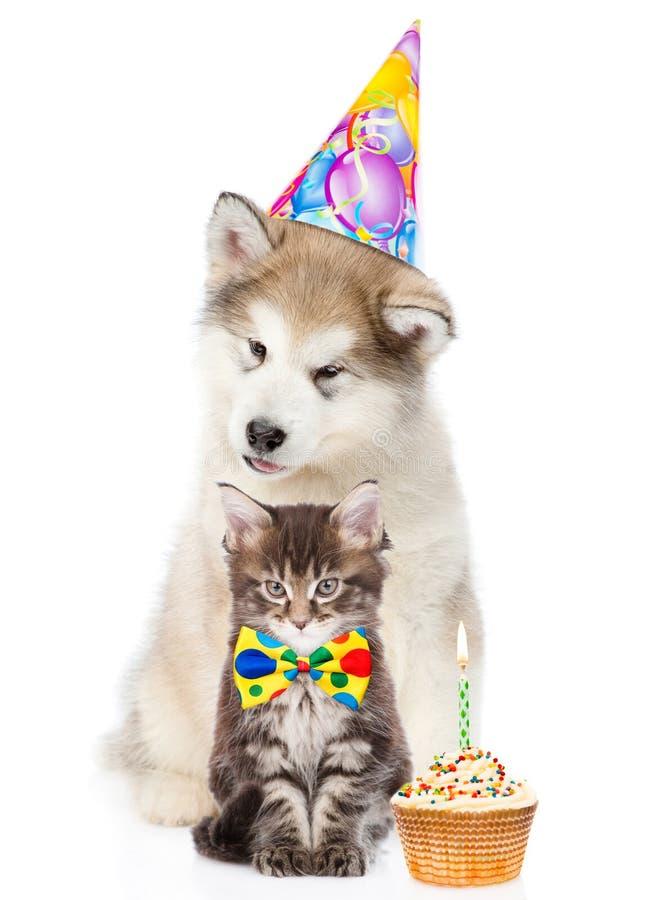 小猫和小狗在生日帽子用杯形蛋糕 查出在白色 图库摄影