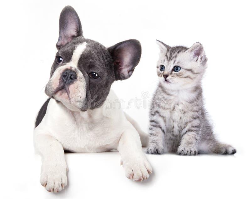小猫和小狗 库存照片