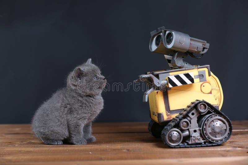 小猫和机器人 库存照片
