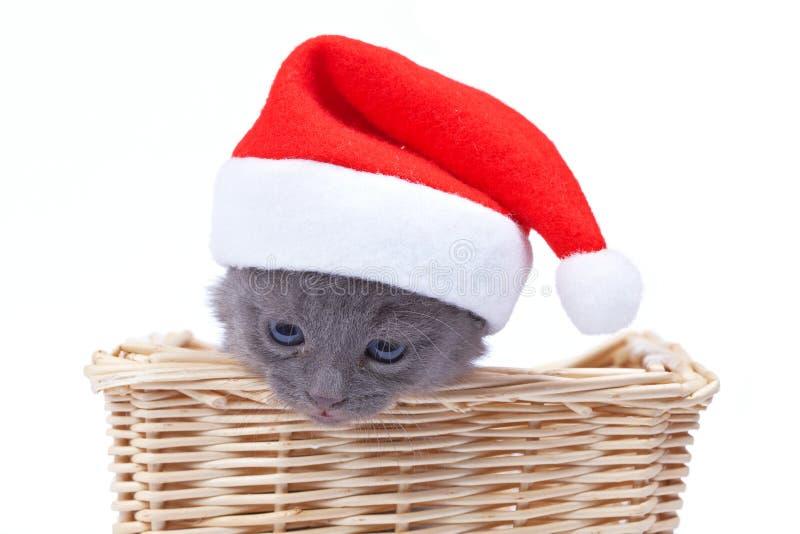 小猫圣诞老人 库存图片