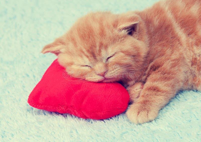 小猫在一个红色心形的枕头睡觉 库存图片