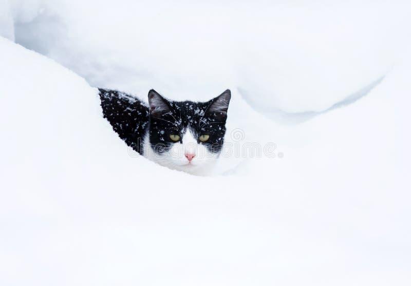 小猫在冬景花园降雪时间的白色随风飘飞的雪蹲下了 库存图片