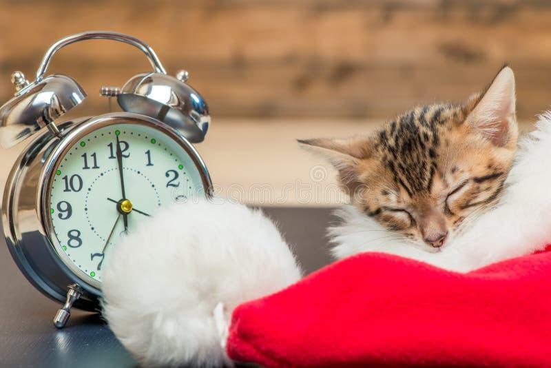 小猫在圣诞老人的帽子其次睡觉 库存照片