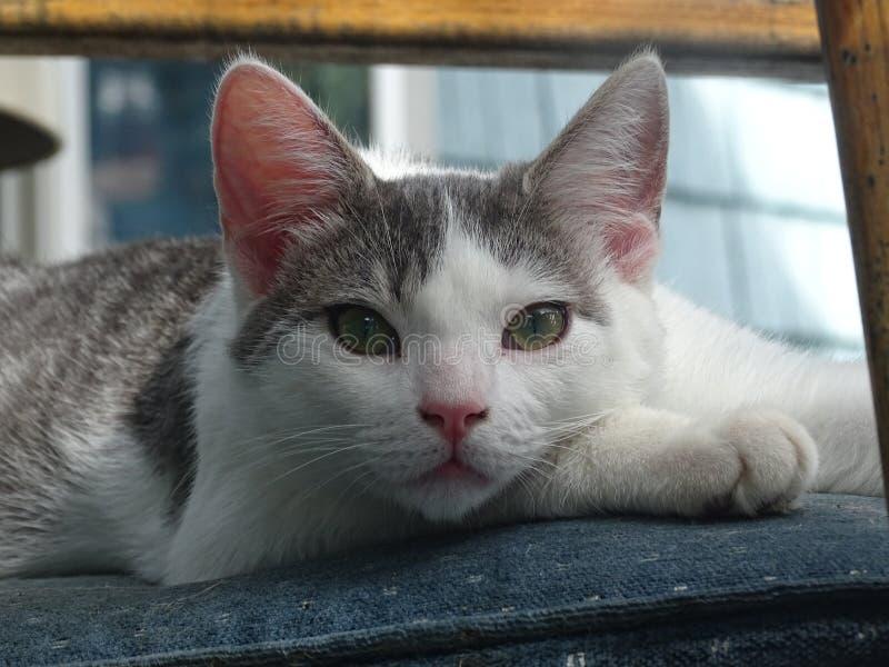 小猫在外面的椅子上闲逛 免版税库存图片