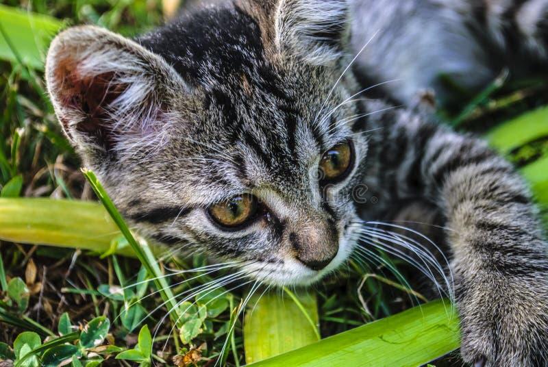 小猫在庭院里 免版税图库摄影
