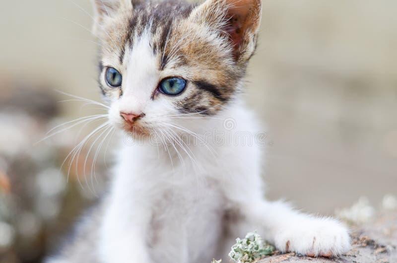 小猫在庭院里 免版税库存照片