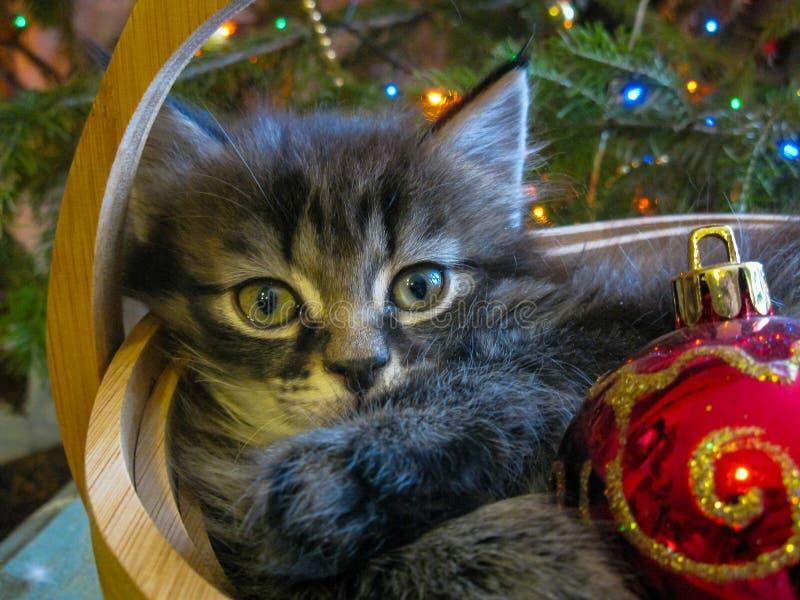 小猫在新年 免版税库存图片