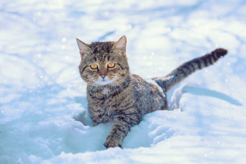小猫在深雪走 库存照片