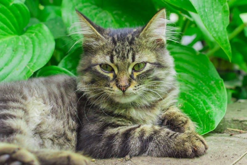 小猫在草在 库存照片
