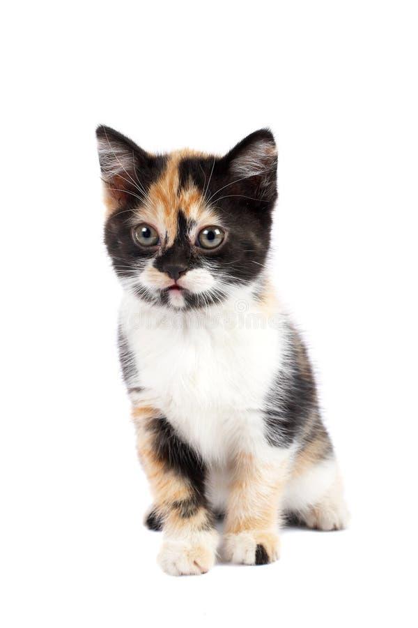 小猫悲伤坐 免版税库存照片