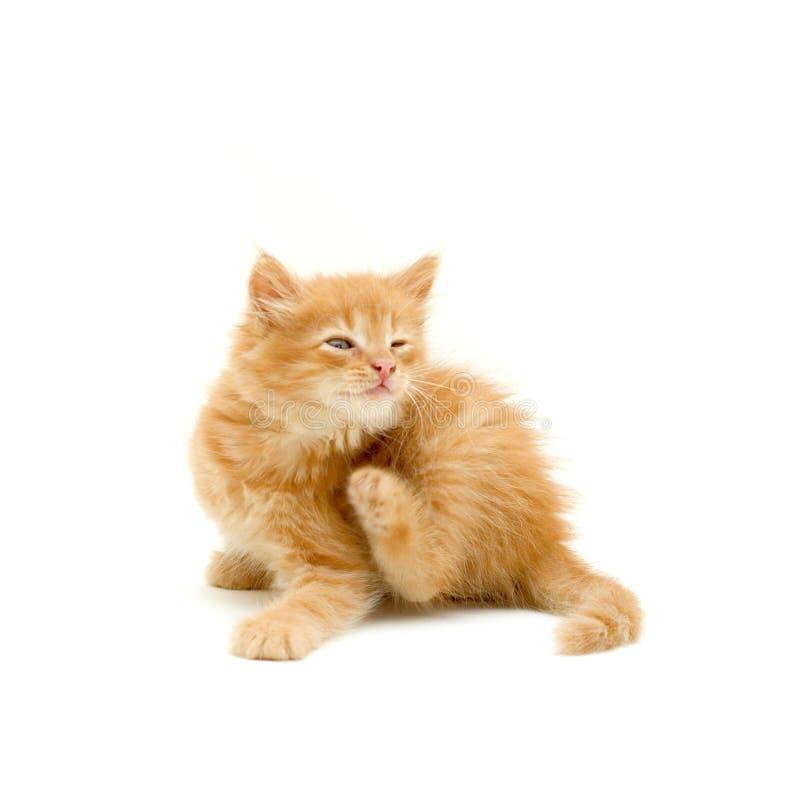 小猫抓 图库摄影
