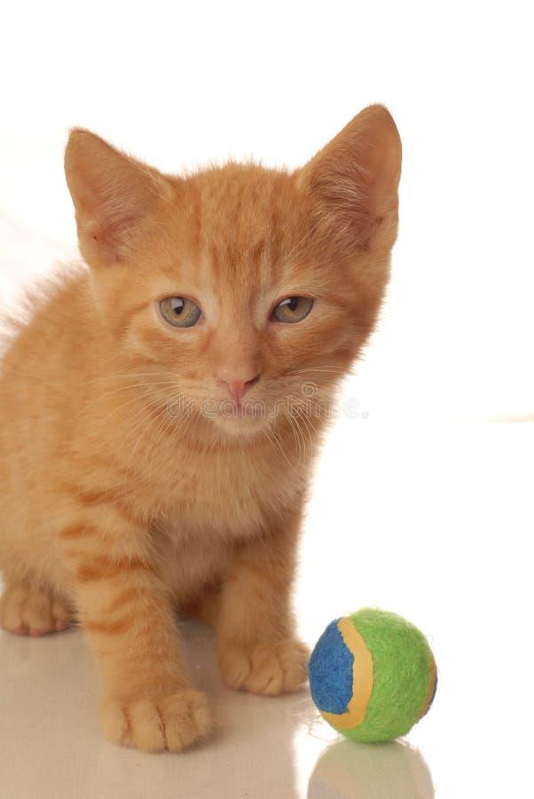 小猫橙色使用的平纹 库存图片