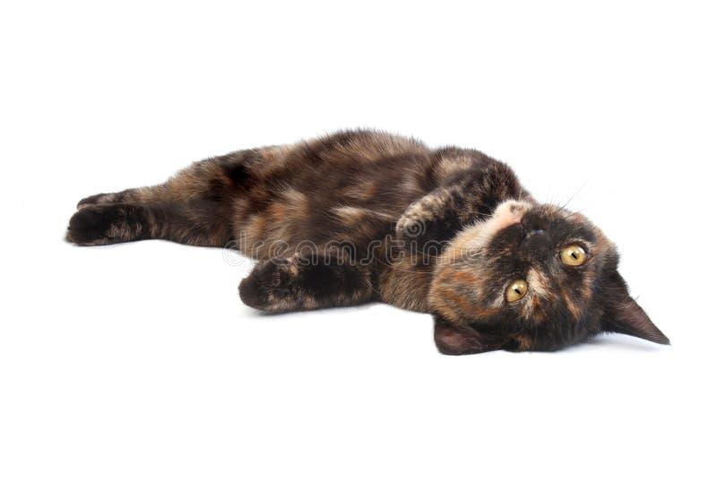 小猫滚 库存照片