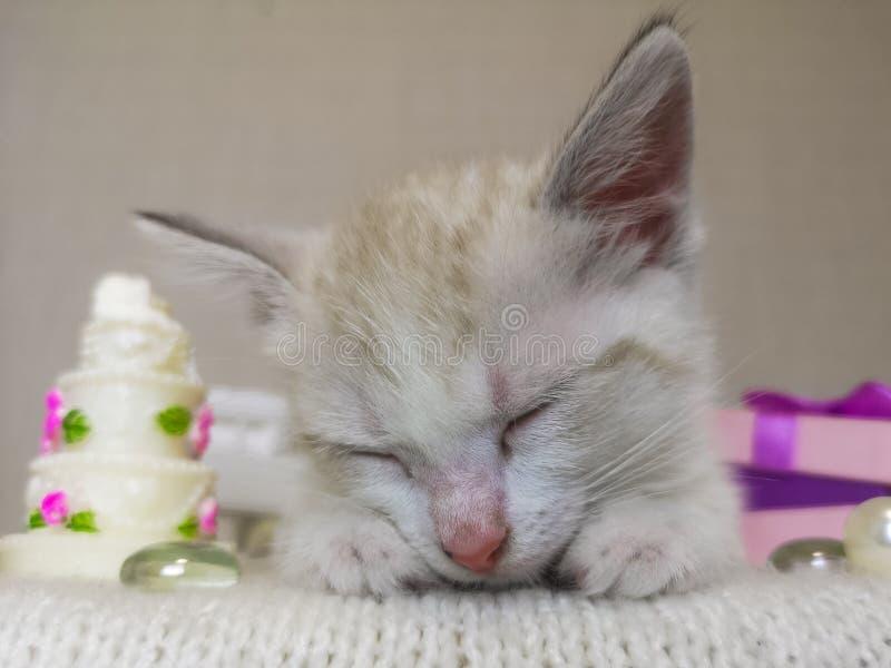小猫甜睡觉 猫休息 库存图片