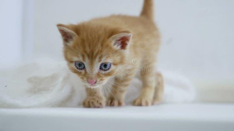 小猫的一点从滑稽的窗台RED丢弃下来 免版税库存照片