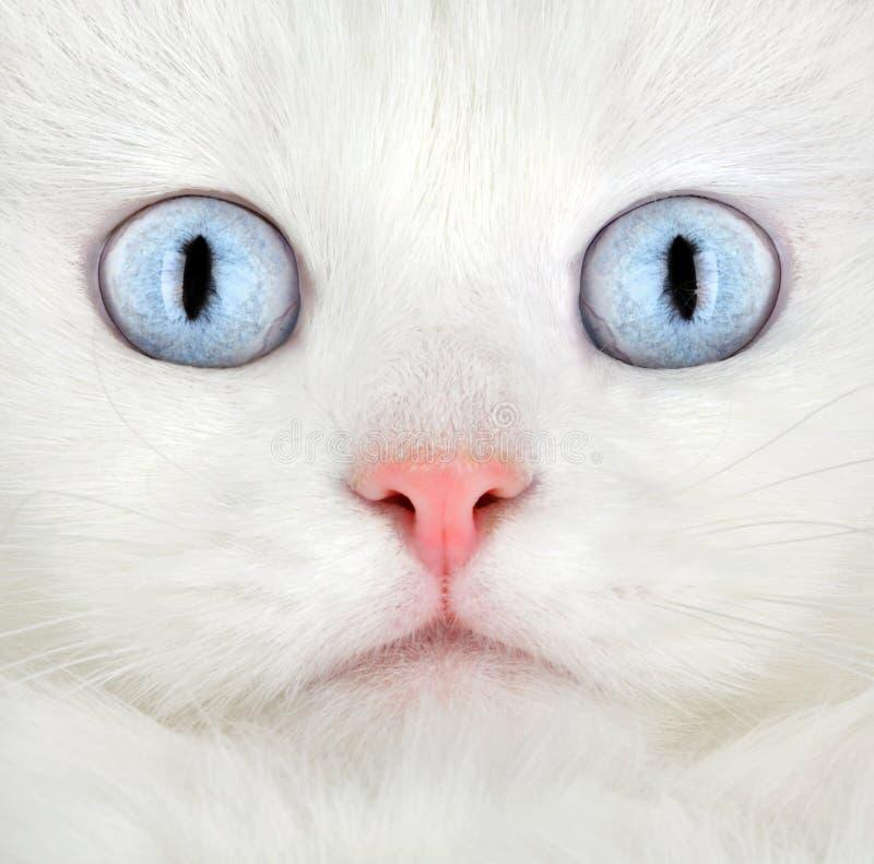 小猫纵向白色 图库摄影