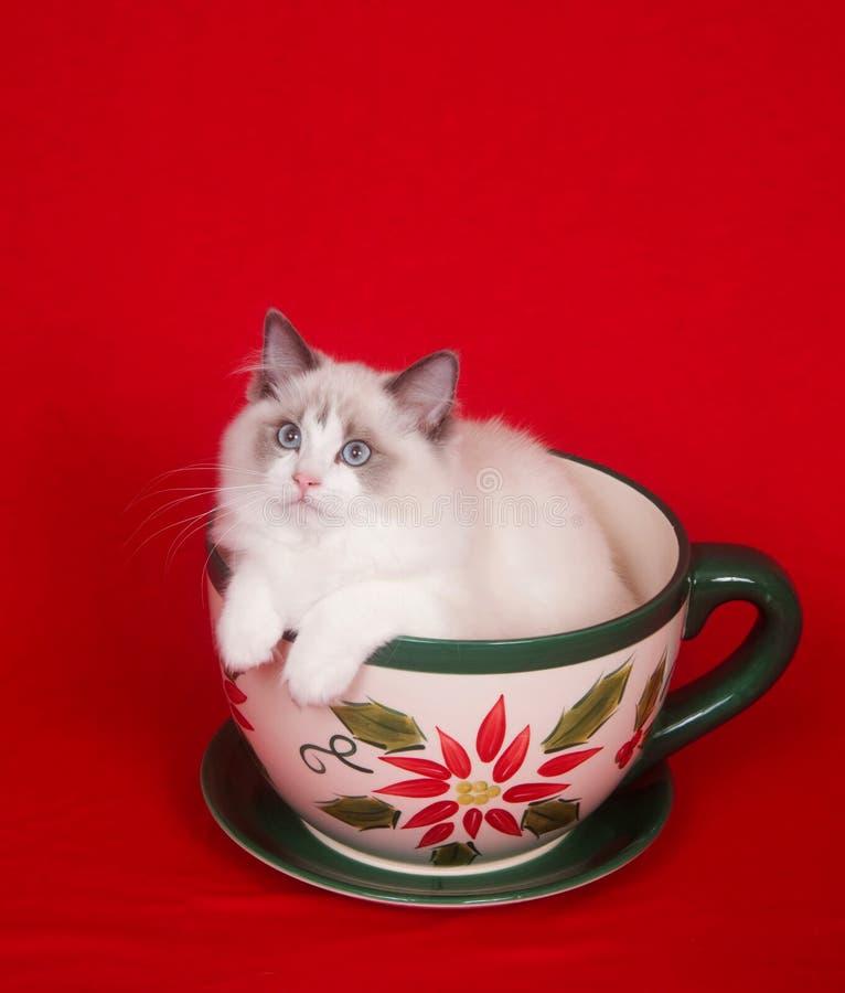 小猫茶杯 图库摄影