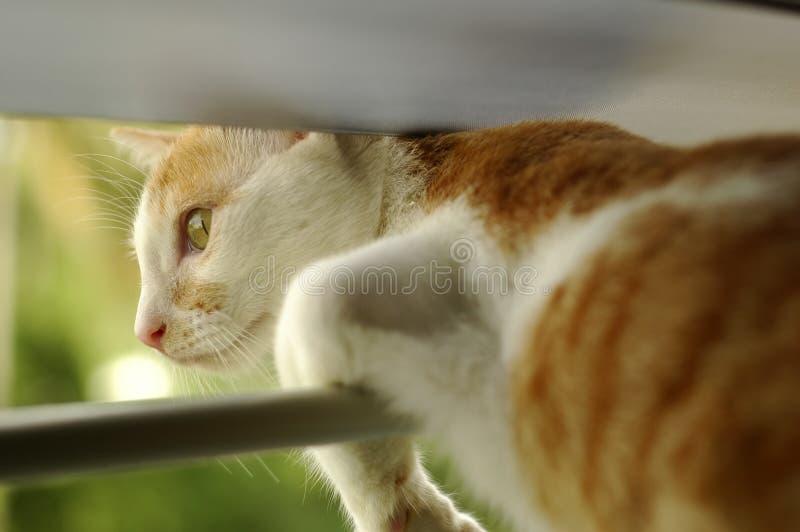 小猫视窗 免版税库存照片