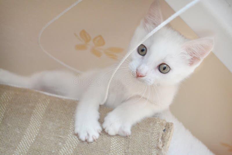 小猫路运行白色 图库摄影