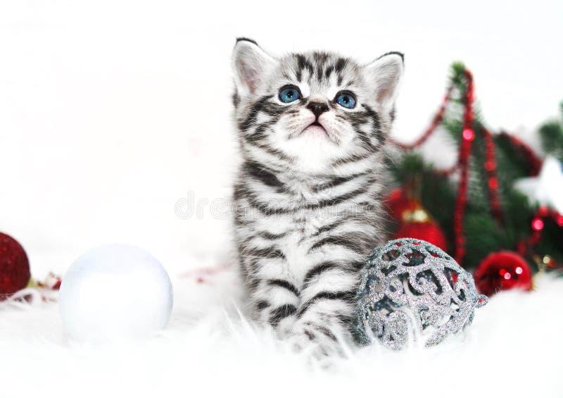 小猫镶边逗人喜爱的开会在圣诞树下 库存照片