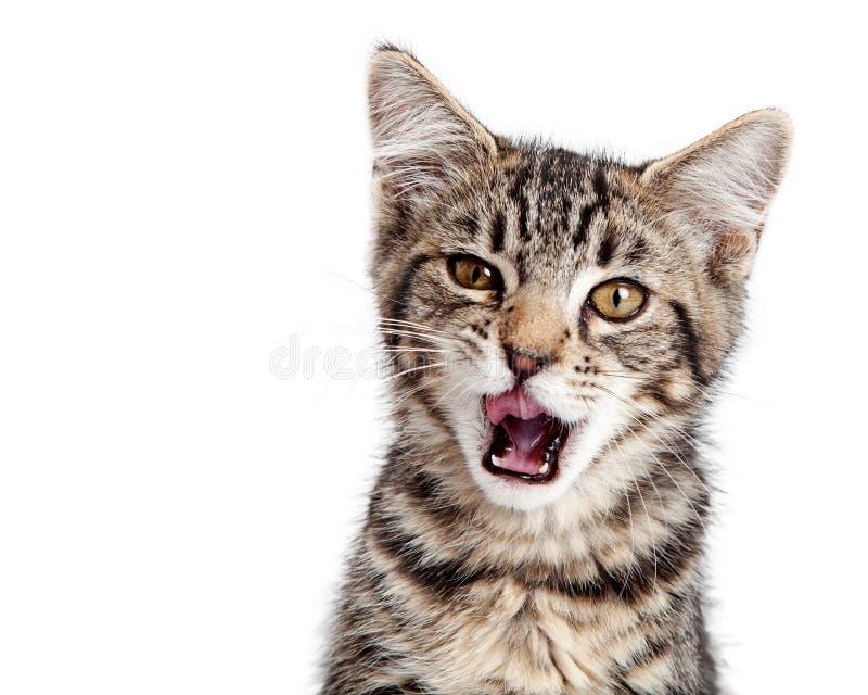 小猫饥饿的嘴开放宽 免版税库存图片