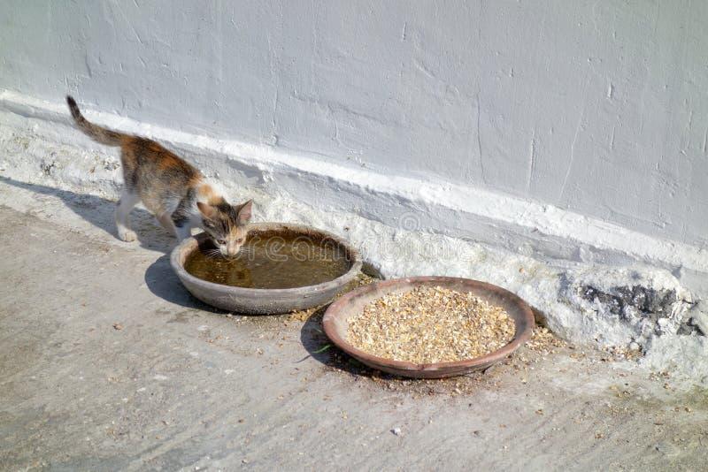 小猫饮用水在希腊 库存图片