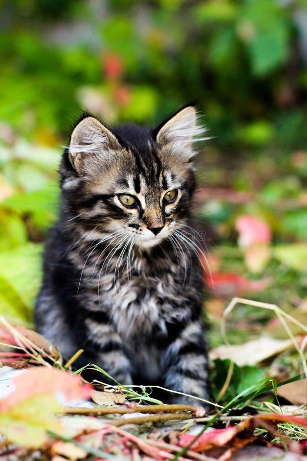 小猫,在秋叶的小猫,全部赌注在叶子,小猫开会,对边的小猫神色坐 免版税库存图片