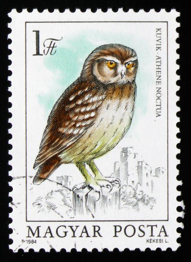 小猫头鹰雅典娜小猫头鹰,系列,大约1984年 免版税库存照片