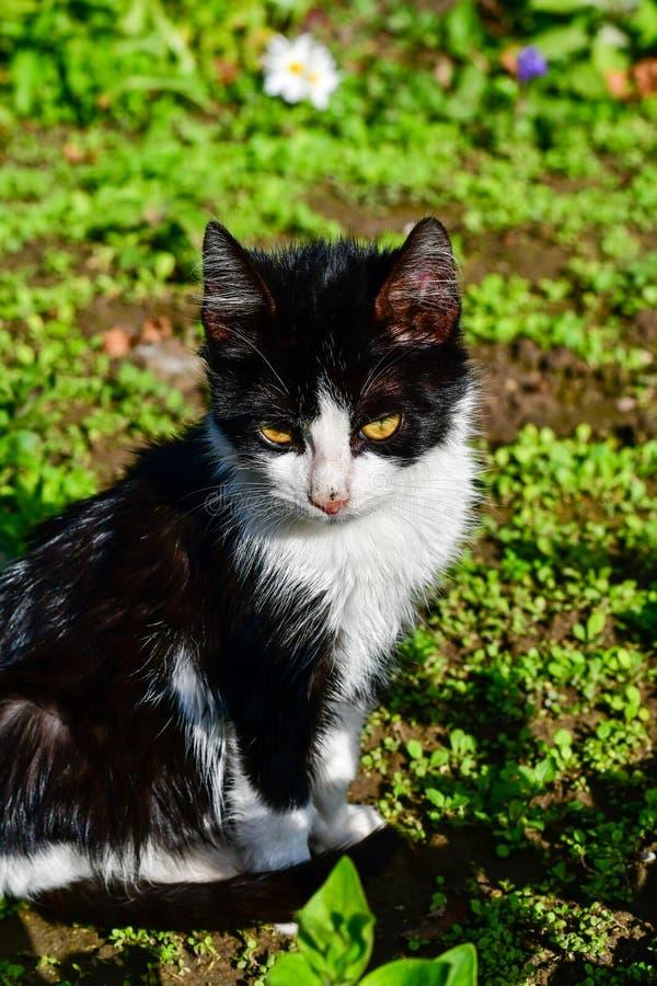 小猫 免版税图库摄影