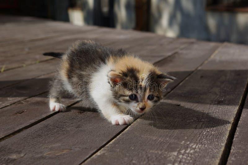 Download 小猫 库存照片. 图片 包括有 似猫, 敌意, 空白, 招标, 小猫, 多彩多姿, 毛茸, 孤独, 表面 - 15695740