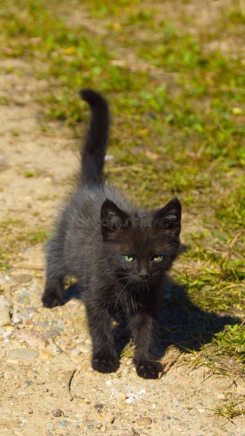 黑小猫 库存图片