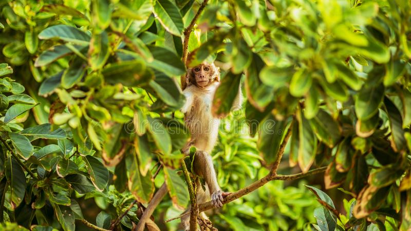 小猴子在猴子海岛 免版税库存照片