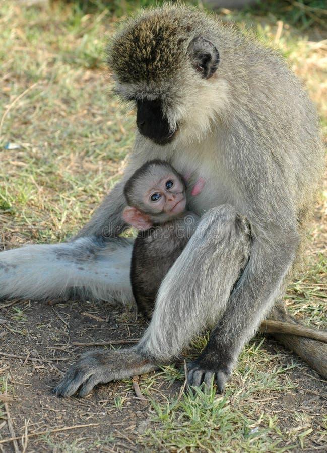 小猴子母亲 免版税图库摄影