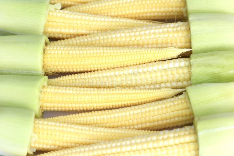 小玉米 免版税库存照片