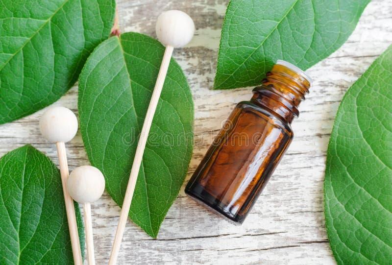小瓶精油、分散器芦苇和新鲜的叶子在木背景 aromatherapy概念温泉 免版税库存图片