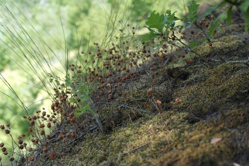 小生态系在森林王国 免版税库存照片