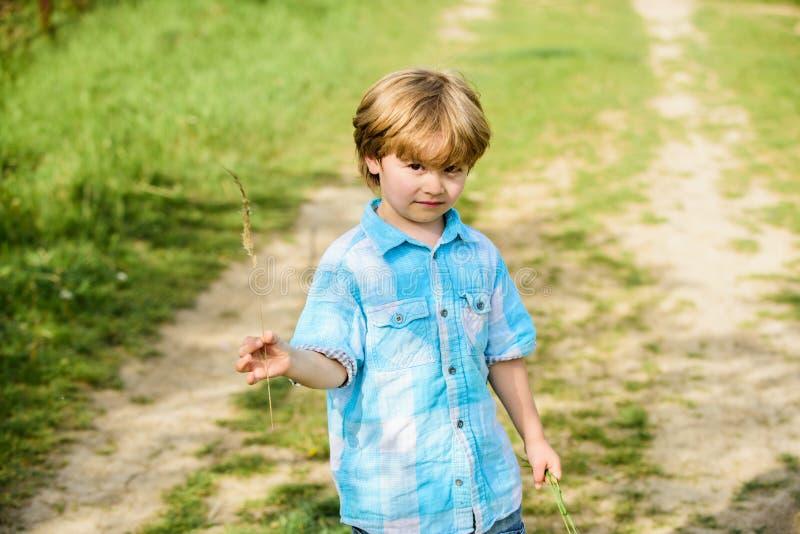 小男孩举行小尖峰草在手中 r 人和自然 小孩子走室外 r Eco?? 免版税库存照片